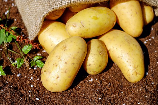 regionalna hurtownia ziemniaków